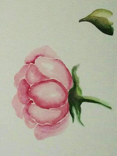Rosa13
